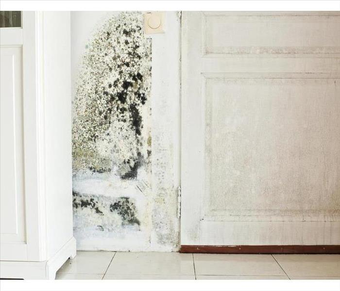 Mold Remediation When Dealing with Mold, Don't Just Hire Anyone