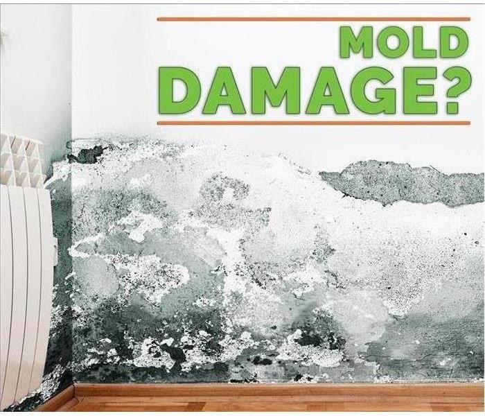 Mold Remediation Cleaning Mold with Bleach is never the answer