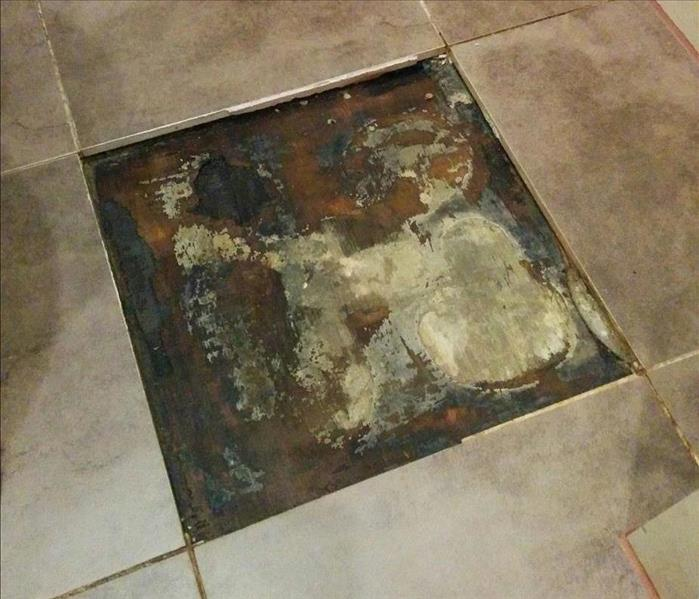 Mold Remediation The small things aren't always small