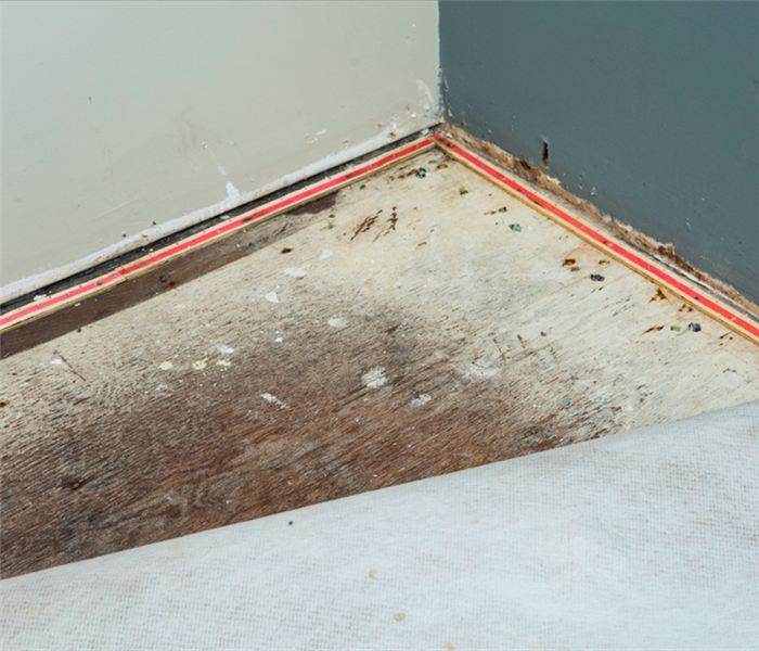 Water Damage Answered: Your Burning Questions About Water Damage Remediation in Setauket